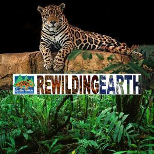 Listen to Episode 17: Mark Fisher on Rewilding Drift in Europe